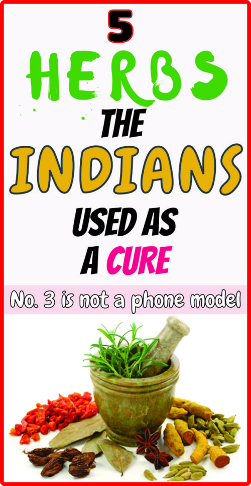 5 HERBS THE INDIANS USED AS A NATURAL CURE